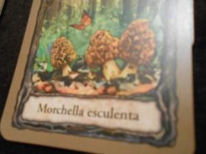 Les succulentes morilles, au nombre de 3, et bien je vais me les cuisiner !!! Miam miam...