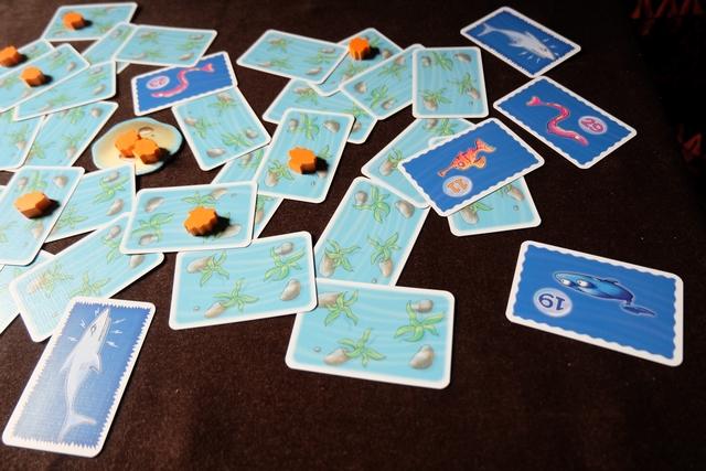 Ca commence... :-( Leila va empocher la raie n°19 et deux coquillages, les deux requins se chargeant de dévorer les deux anguilles.