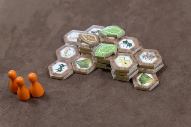 La fourmilière de Tristan, intermédiaire en terme de développement, sans aucune proie, mais avec trois champignons très rentables !