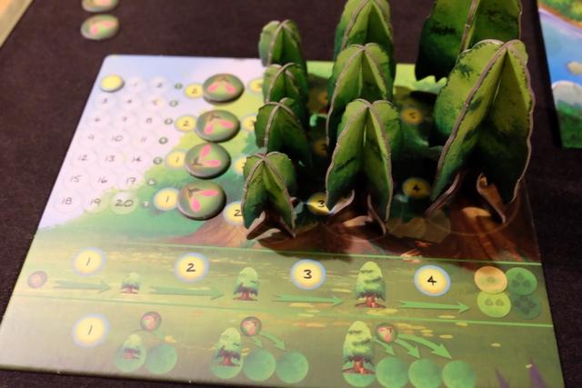 Chacun a un plateau individuel sur lequel il place ses arbres et ses graines (4 graines et 4 petits arbres, 3 moyens et 2 grands). Y figurent aussi : sa piste de points d'ensoleillement et de nombreuses informations concernant les possibilités à son tour. Nickel !