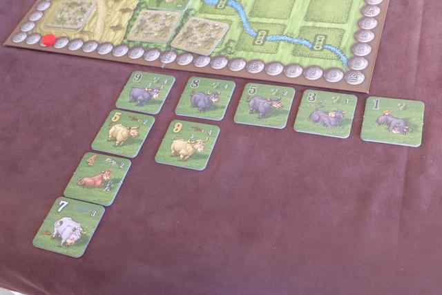 Les vaches de Leila juste avant les ventes finales...